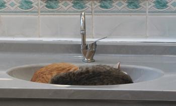 Cats sleeping in the sink, men's washroom Ephesus