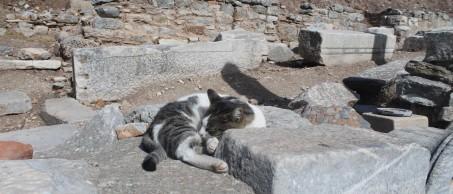 Sleeping cat Ephesus