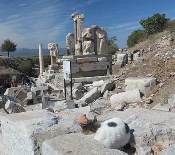 Sleeping cat in front of ruins Ephesus