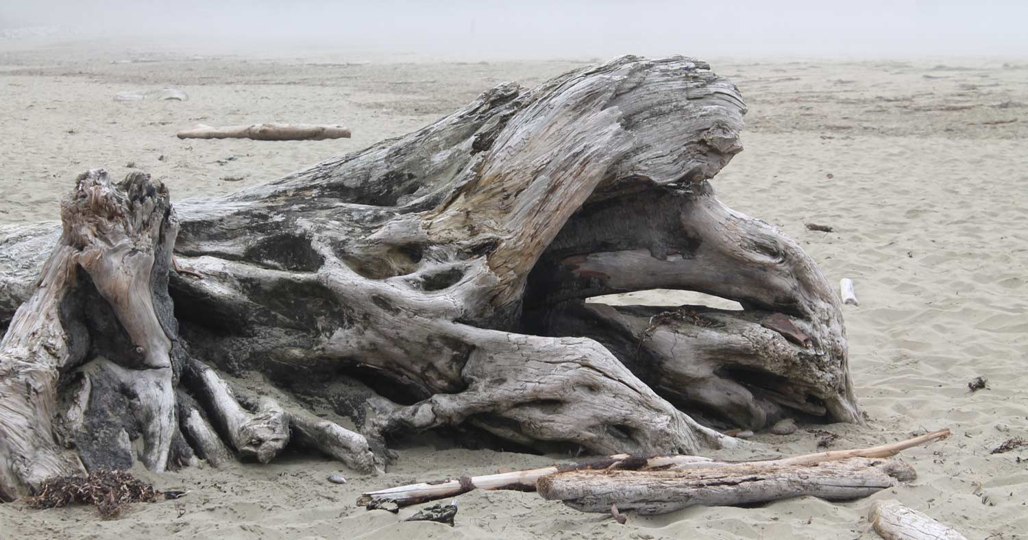Driftwood, Wickaninnish Beach